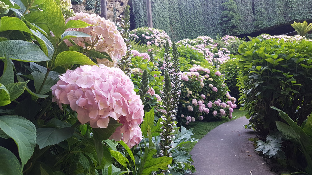 A view of the hydrangeas and other plants in Umpherston Sinkhole.